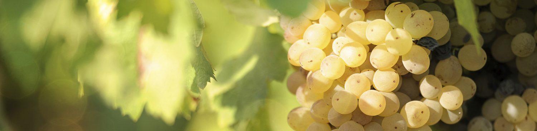 La Plateforme Orientation BIO pour la viticulture valaisanne